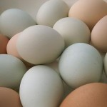 how many calories are in an egg