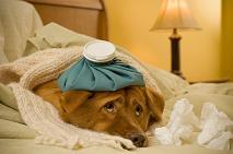 treat dog puppy fever