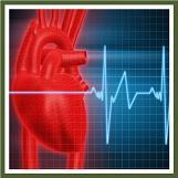 Best Exercises for Cardiovascular Health