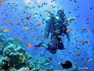Best Places in the World to Scuba Dive