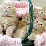 How to Travel with Kittens