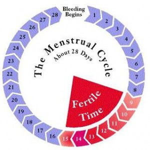 How to Count Your Menstrual cycle on a Calendar